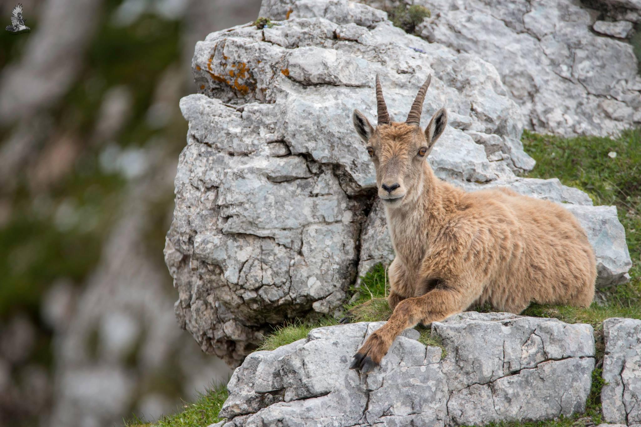 Naturfotografie Pinzgau